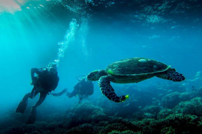 Diving-Slide-12